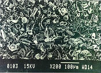 """Yoshida Shirasu"" Microscope Photograph01"