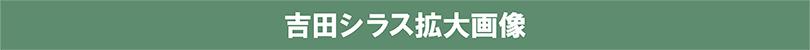 吉田シラス拡大画像