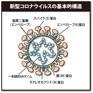 新型コロナウイルスの基本的構造